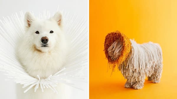 Kickstarter, purebred dogs