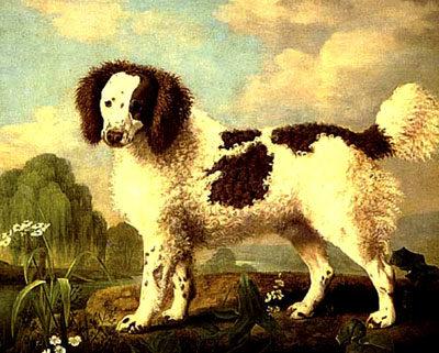 purebred dogs, breeders, New Age