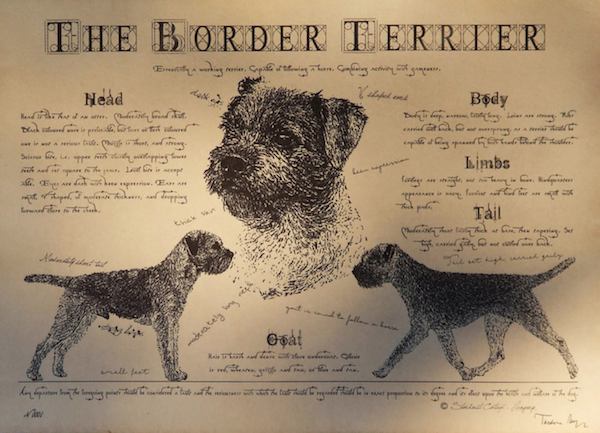 Border Terrier,Reedwater Terrier,Coquetdale Terrier,Jacob Robson,John Robson