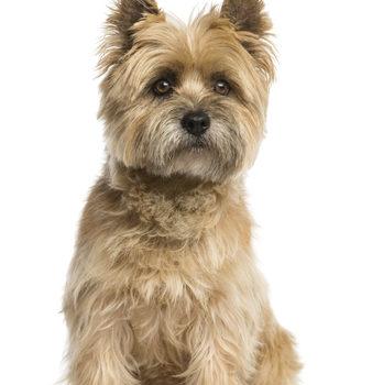 Cairn Terrier,state dog,Kansas,Rep. Ed Trimmer
