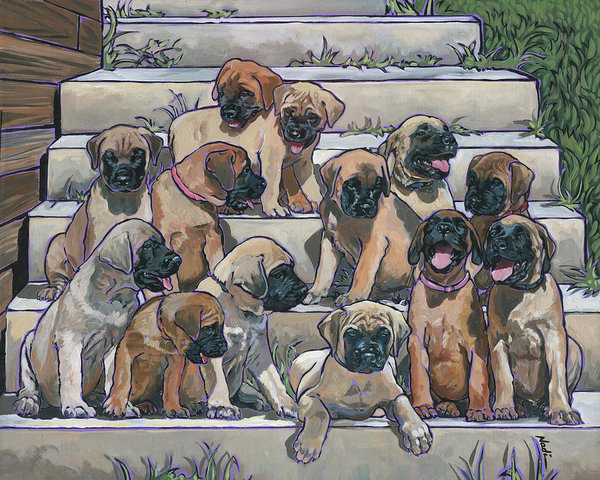 ,English Mastiff,Old English Mastiff,Mastie,Bullmastiff, Mastiff, Boxer, Neapolitan Mastiff, Tibetan Mastiff, Saint Bernard, Great Dane,Dogue de Bordeaux, Cane Corso