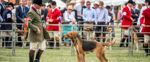 """Fellhounds, Gazehounds,Masters of Basset Hounds Association,Bloodhounds, Basset Hounds, Beagles, Draghound,""""Festival of Hunting"""",Peterborough Royal Foxhound Show Society"""