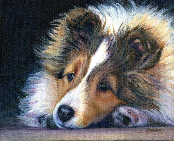 shetland sheepdog,Sheltie, Icelandic Sheepdog, Lilliputian Collie,Shetland Collie, name, history, James Loggie, toonie dogs