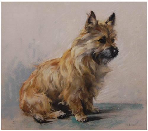 Cairn Terrier,cairns