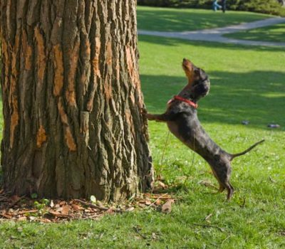 Coonhound,phrase,expression,hunting