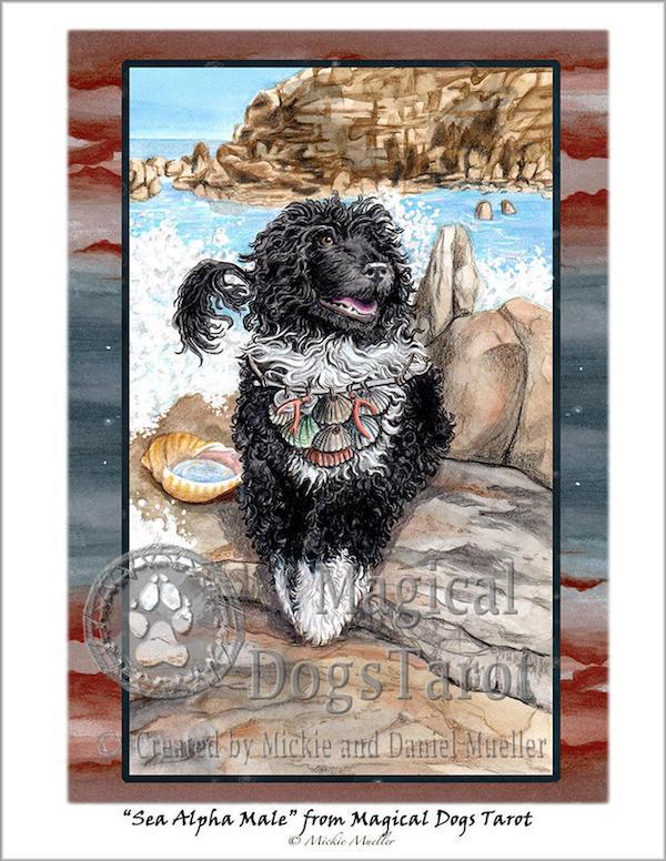 Portuguese Water Dog,standard,
