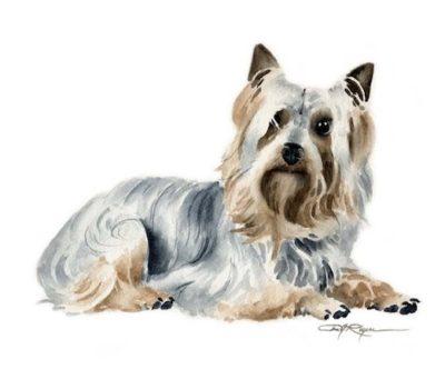 Silky Terrier,Yorkshire Terrier,Aus,ralian Terrier