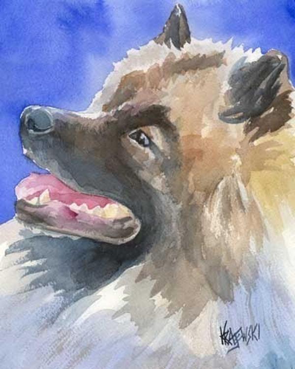 Keeshond,Wolfspitzen, Chiens Loup, Lupin,Fox-Dogs, Dutch Barge Dogs, overweight Pomeranians,Cornelius de Gyzelaar