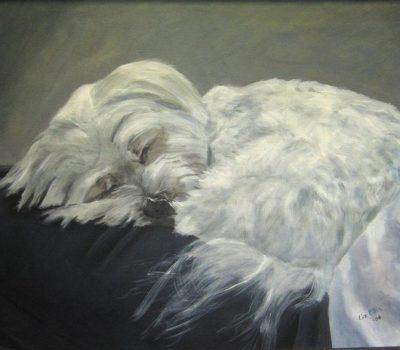 Maltese, Maltese Sleeve Dog,Melita,Melitaie dog,Roman Ladies' dog, Shock Dog, Spaniel Gentle
