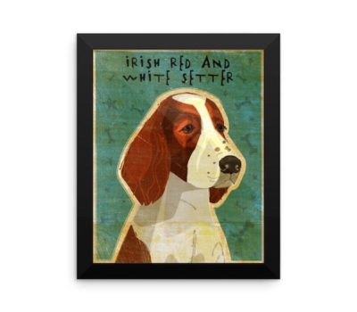 Irish Red and White Setter,color, patches,Reverend Noble Houston