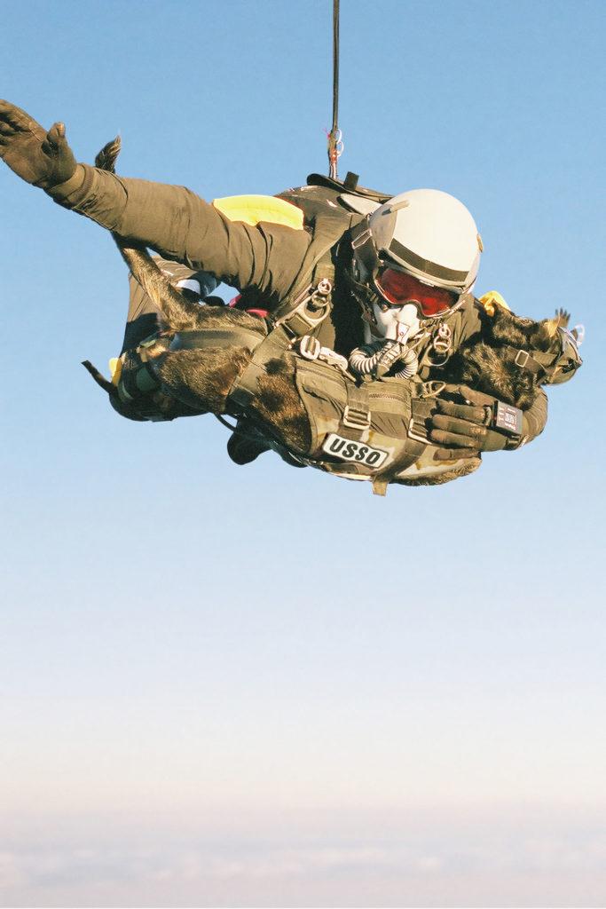 Belgian Laekenois, Belgian Malinois, war dog, military dog, police dog, Cairo, Seal Team Six