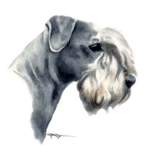 Frantisek Horák,Cesky Terrier,Mr Červenka,Scottish Terrier, Sealyham Terrier