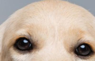 eyes, pigmentation, eye rims