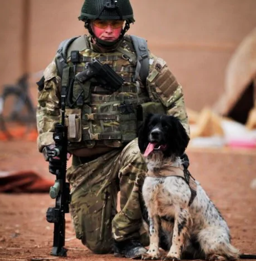English Springer Spaniel,Dicken Meda,war dog, military dog,Corporal Liam Tasker,Sergeant Danny Morgan