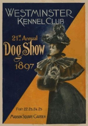 French Bulldog, Salvolatile,dog show,Westminster Kennel Club dog show