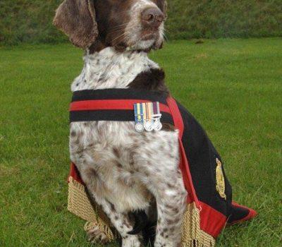 English Springer Spaniel,Dicken Meda,war dog, military dog,Corporal Liam Tasker,Sergeant Danny Morgan
