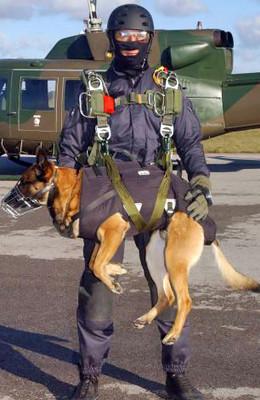 Belgian Laekenois, Belgian Malinois, war dog, military dog, police dog