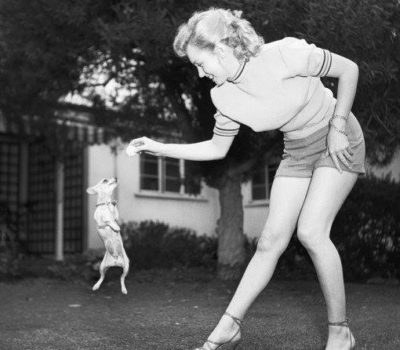 Marilyn Monroe,Chihuahua,movies, cartoon