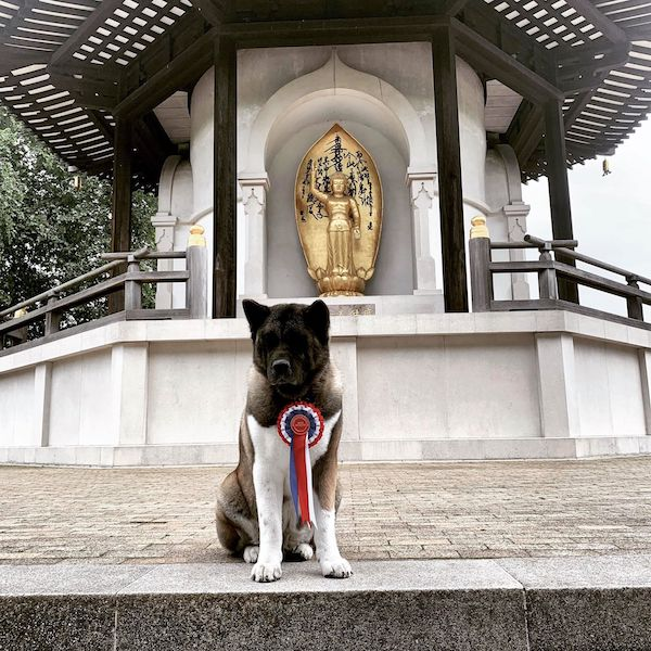 Akita,Not Just Another Pretty Face,Service Dog,Tobias Menzies