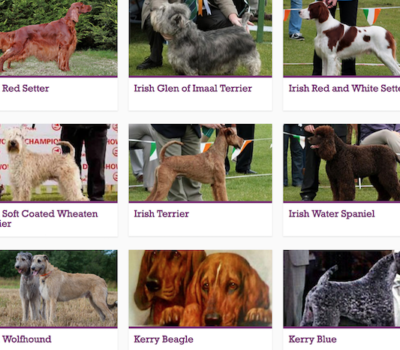 Glen of Imaal Terrier,Irish Water Spaniel, Irish Setter,,Irish Red and White Setter,Soft Coated Wheaten Terrier, Irish Wolfhound, Irish Terrier, Kerry Blue Terrier, Kerry Beagle, Gadharchumann na hÉireann