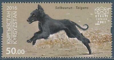 bourki,Kirghiz Borzoi,Kirghiz Greyhound,Kirgiskaya Borzaya,Kyrgyzdyn Taighany,Taigan
