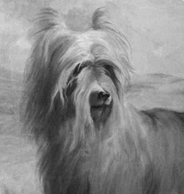 Huddersfield Ben, Yorkshire Terrier