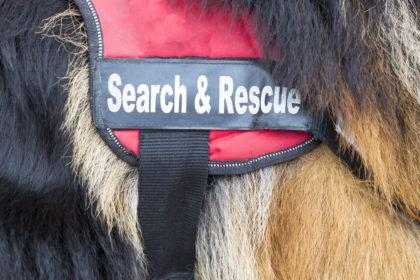 Belgian Tervuren,SAR dog, rescue, FEMA, Topper,