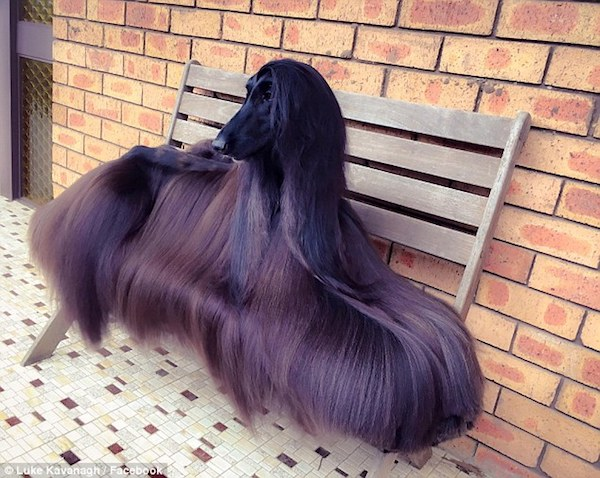 Afghan Hound,terms,Turkish Pants,pajama pants,Tea,