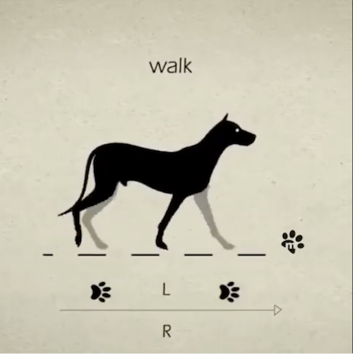 gait, dog movement, pace,cantor, gallop,amble,trot,,