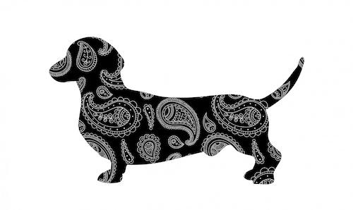 keel,Azawakh,Bloodhound,Dachshund,chest,terms