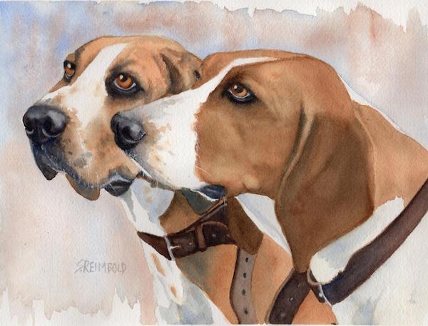 American Foxhound,English Foxhound,