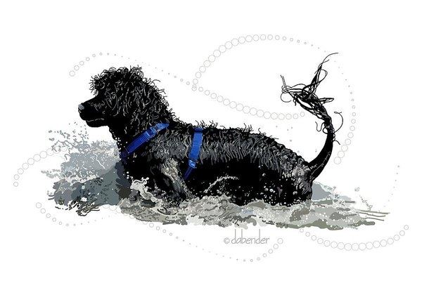 coat, genetics, Georgie Project, K. Gordon Lark,Portuguese Water Dog