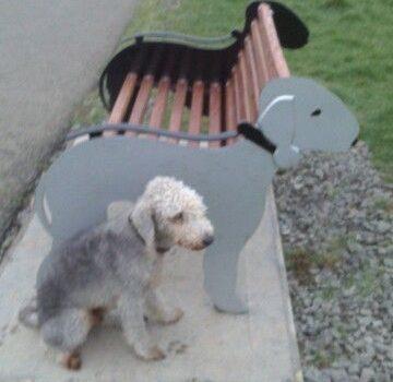 Bedlington Terrier, fabric,park bench,