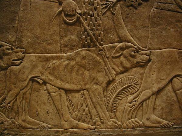 Anatolian Shepherd Dog,Blackhead Karabaş, Anatolian Blackhead, Anadolulu Karabaş, Coban Kopegi,Book of Job