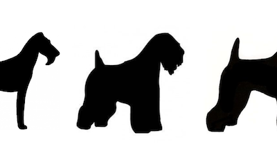 Soft Coated Wheaten Terrier, Kerry Blue Terrier, Irish Terrier