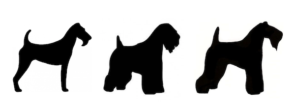 Soft Coated Wheaten Terrier, Kerry Blue Terrier, Irish Terrier