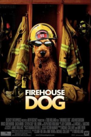 Irish Terrier,film, movie,Soft Coated Wheaten Terrier