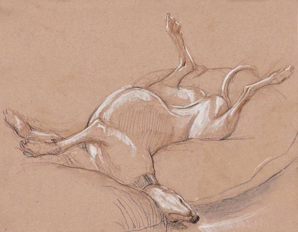 Greyhound, roaching, sleeping