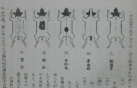 Rising Sun, Japanese Terrier,Seikoukan, hinomaru