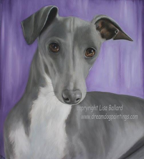 Greyhound,sighthound, Windhunde, Labrelle, Labrele, Levrier,Borzaya