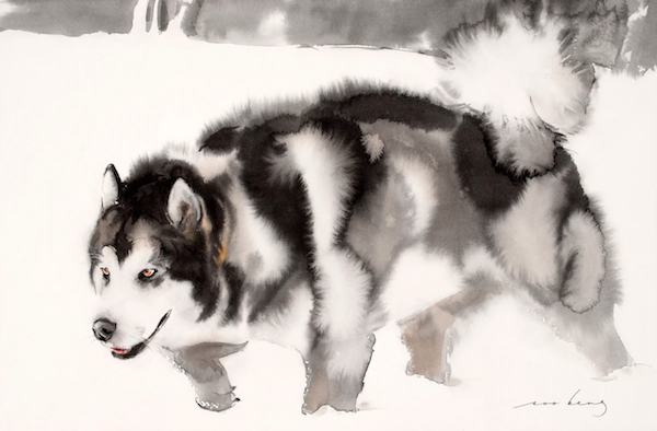 Alaskan Malamute, nordic breeds