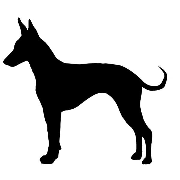 Standard Manchester Terrier, Toy Manchester Terrier, John Hulme,Black and Tan Terrier