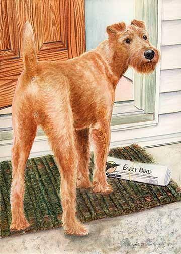 Irish Terrier,vulnerable breed,David Blake Knox,