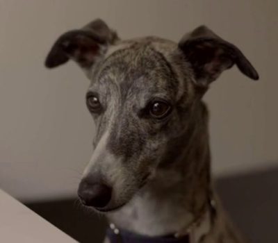 TV, commercial, advertising, Whippet