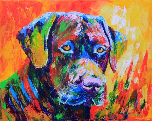 color, Pointer, Azawakh, Greyhound, Whippet, Dachshund