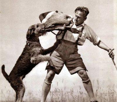 Airedale Terrier,police dog,British Colonel Edwin Hautenville Richardson