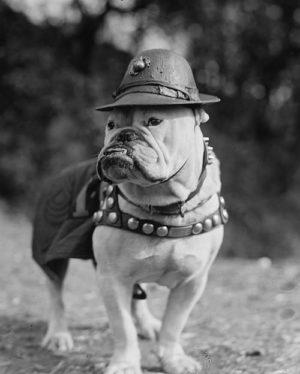 Sgt. Major Jiggs,Bulldog,Marine Corp,mascot,banndogge,Shakespeare,Prestwich Eaton