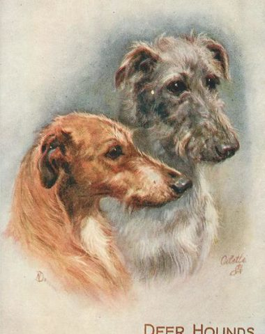 Scottish Deerhound,King Robert the Bruce,Sir William St. Clair, Help and Hold, legend