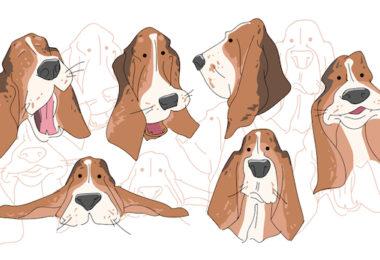 Beagle,Basset Hound,foot hound,beagling, basseting