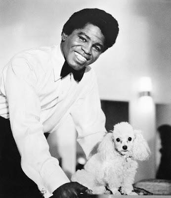 Poodle, James Brown, music